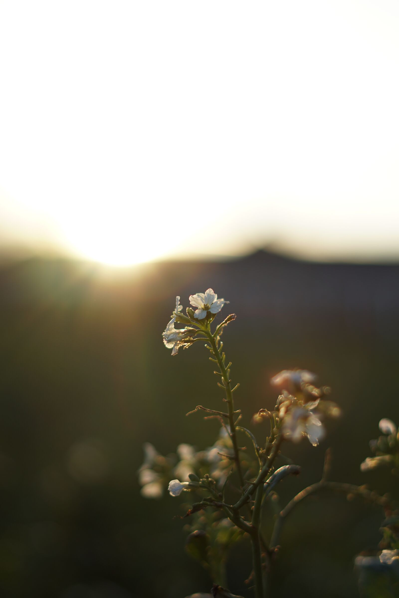 "Sony a6500 sample photo. ""Sunset, sunset grass, nature"" photography"