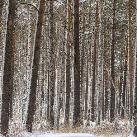 winter, bench, snow, Pentax K-500
