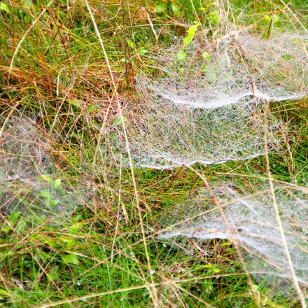 meadow, spin, weave, Canon EOS 600D