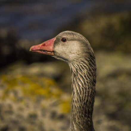 birds, nature, animals, Samsung NX5