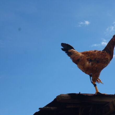 animal, bird, blue, sky, Panasonic DMC-FH4