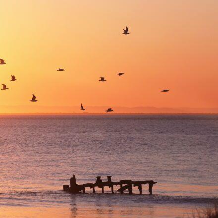 sky, birds, dock, Canon EOS 5D MARK III