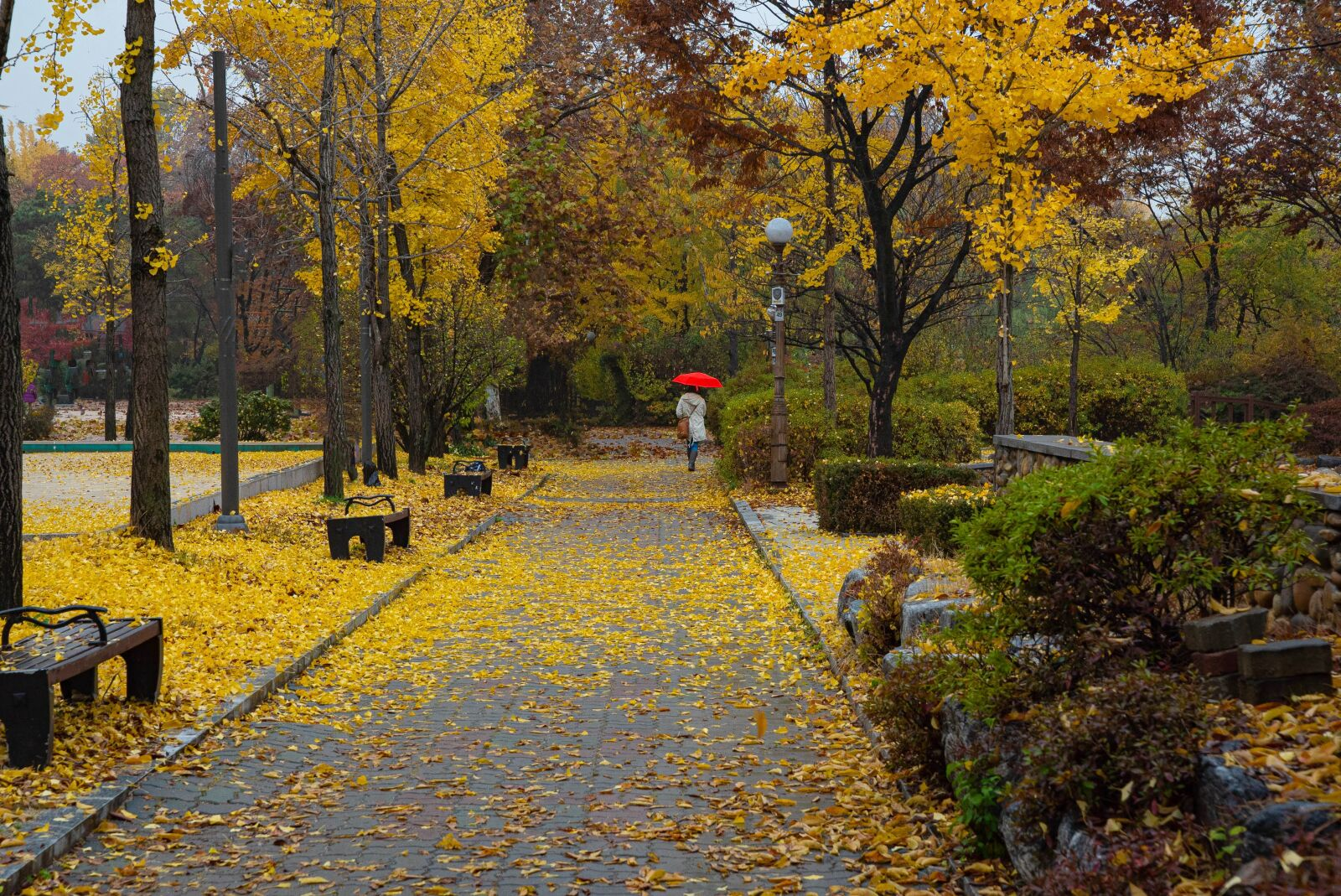 "Sony a7S sample photo. ""Rain, yellow, wet"" photography"