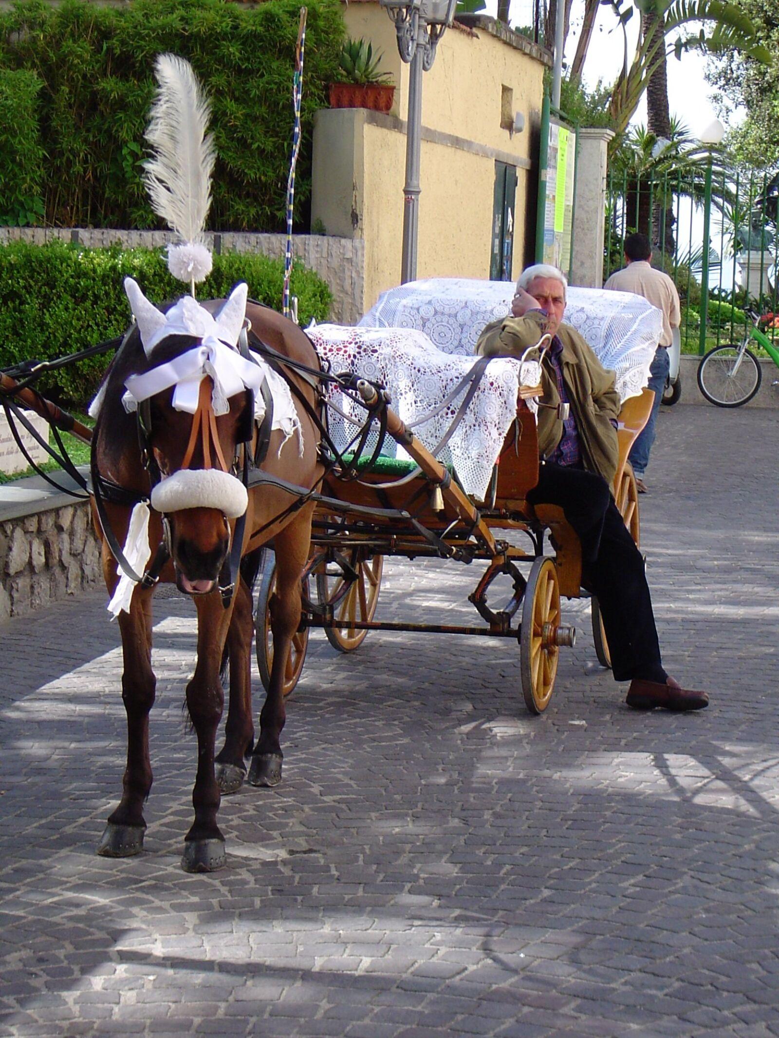 "Sony DSC-P72 sample photo. ""Wedding, horse, white"" photography"