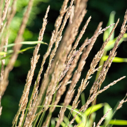 nature, straws, summer, Canon EOS-1D X