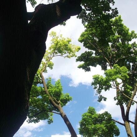 trees, sky, nature, Fujifilm FinePix JV200