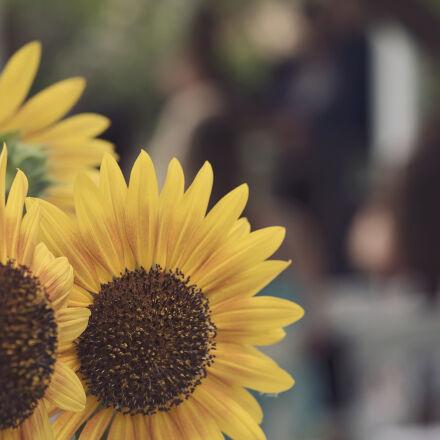 flowers, fresh, garden, summer, Nikon D750