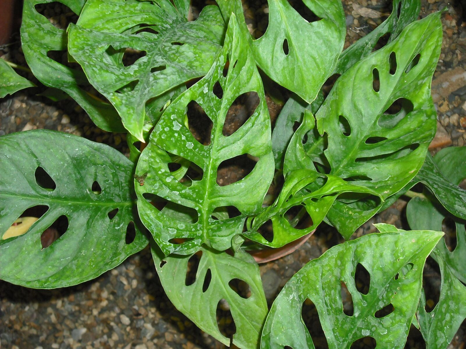 leaves, gaps, garden