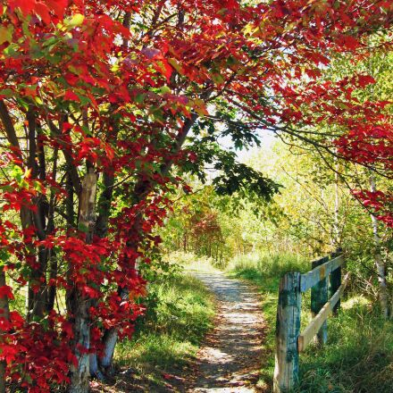 pathway, autumn, fall, Canon POWERSHOT SD880 IS