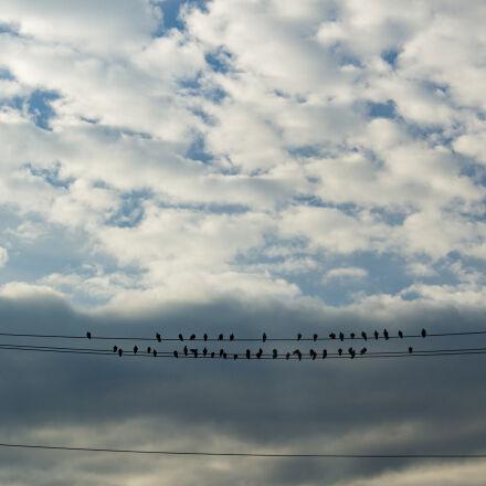 birds, clouds, fall, Canon EOS 60D