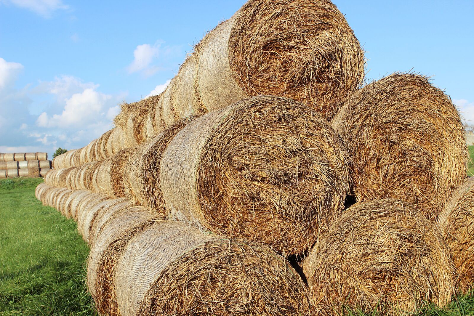 """Canon EOS 600D (Rebel EOS T3i / EOS Kiss X5) sample photo. """"Hay, bale, agriculture"""" photography"""