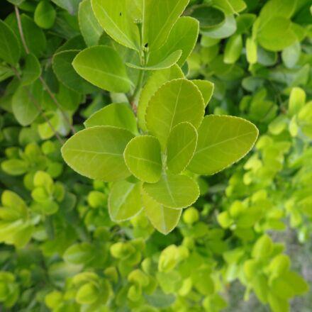 sheet, plant, nature, Sony DSC-W630