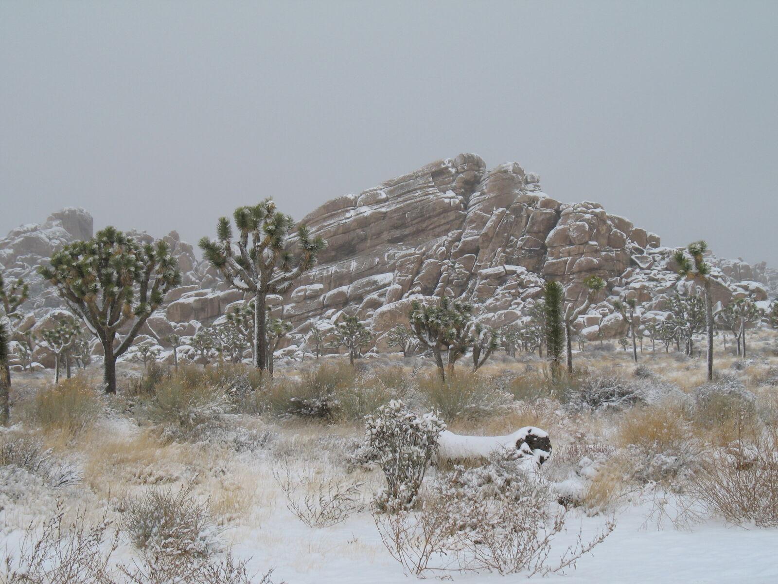 "Canon POWERSHOT A620 sample photo. ""Joshua, tree, snow"" photography"