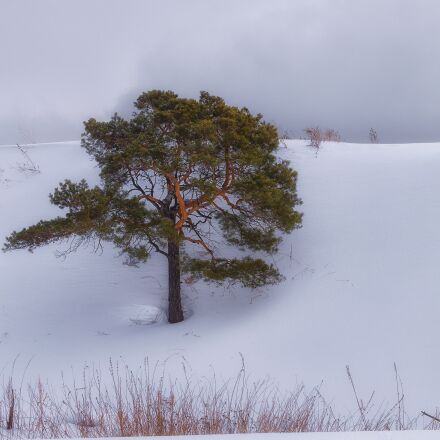 snow, pine, cloud, Pentax K-500