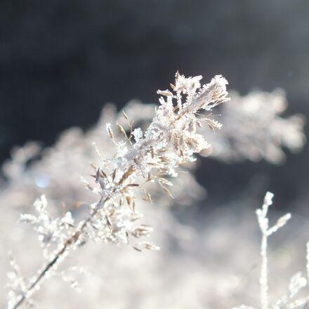 winter, frost, ice, Fujifilm FinePix HS25EXR