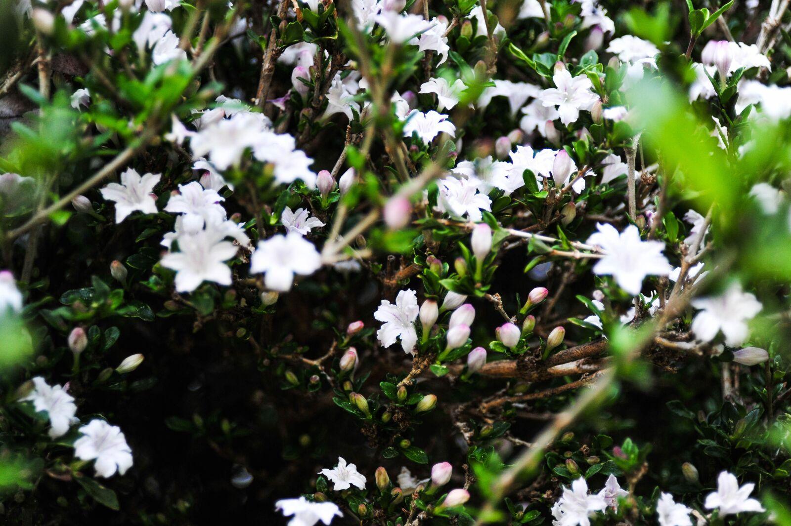 "Nikon D700 sample photo. ""Flower, flowers, spring"" photography"