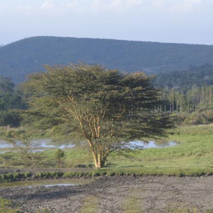 scenery, shrub, tree, Nikon D3200