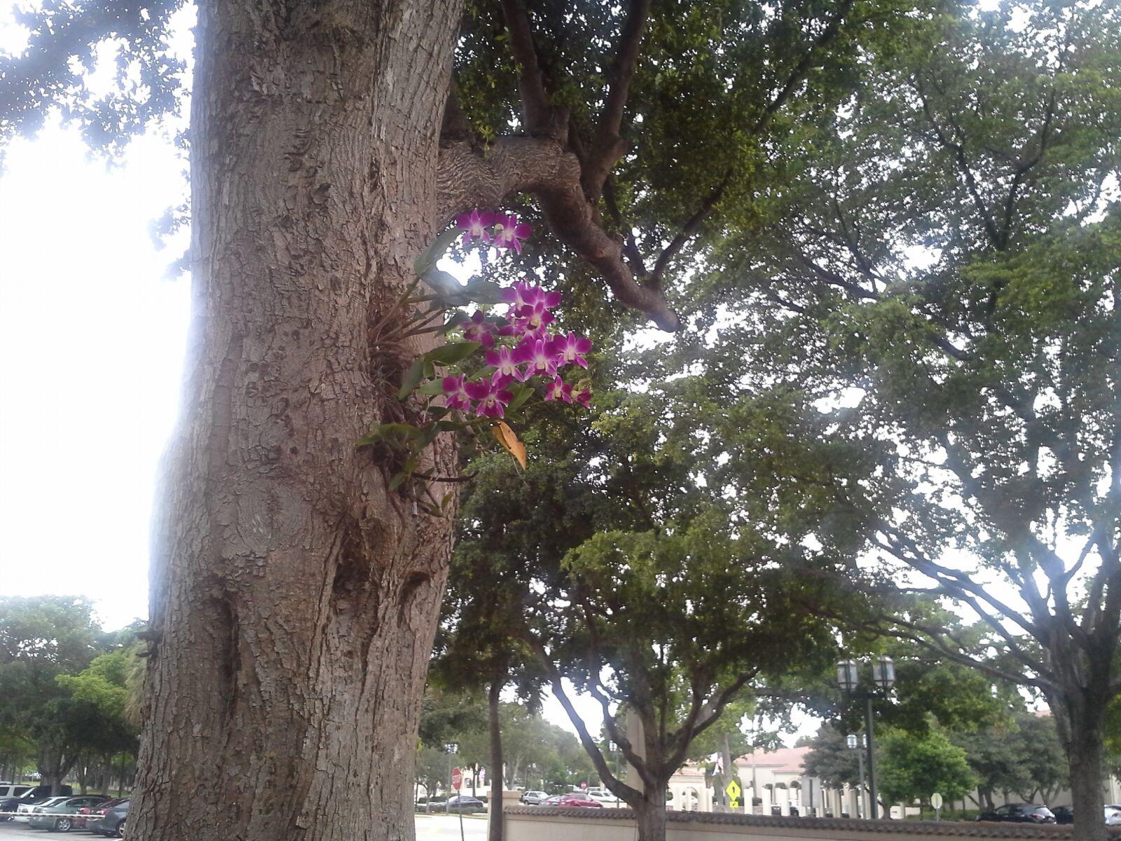 purple, orchid