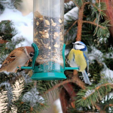 sparrow, tit, winter, Canon EOS 1100D
