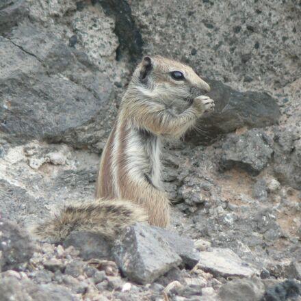 nature, animal world, animal, Panasonic DMC-FZ5