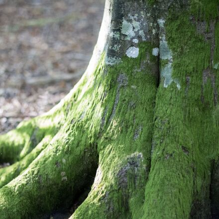 moss, nature, wood, Canon EOS 6D