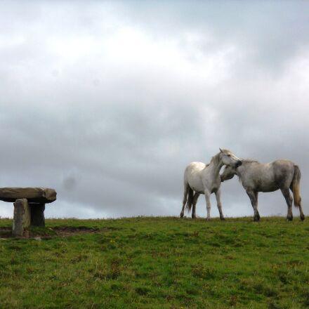 horses, Nikon COOLPIX S570