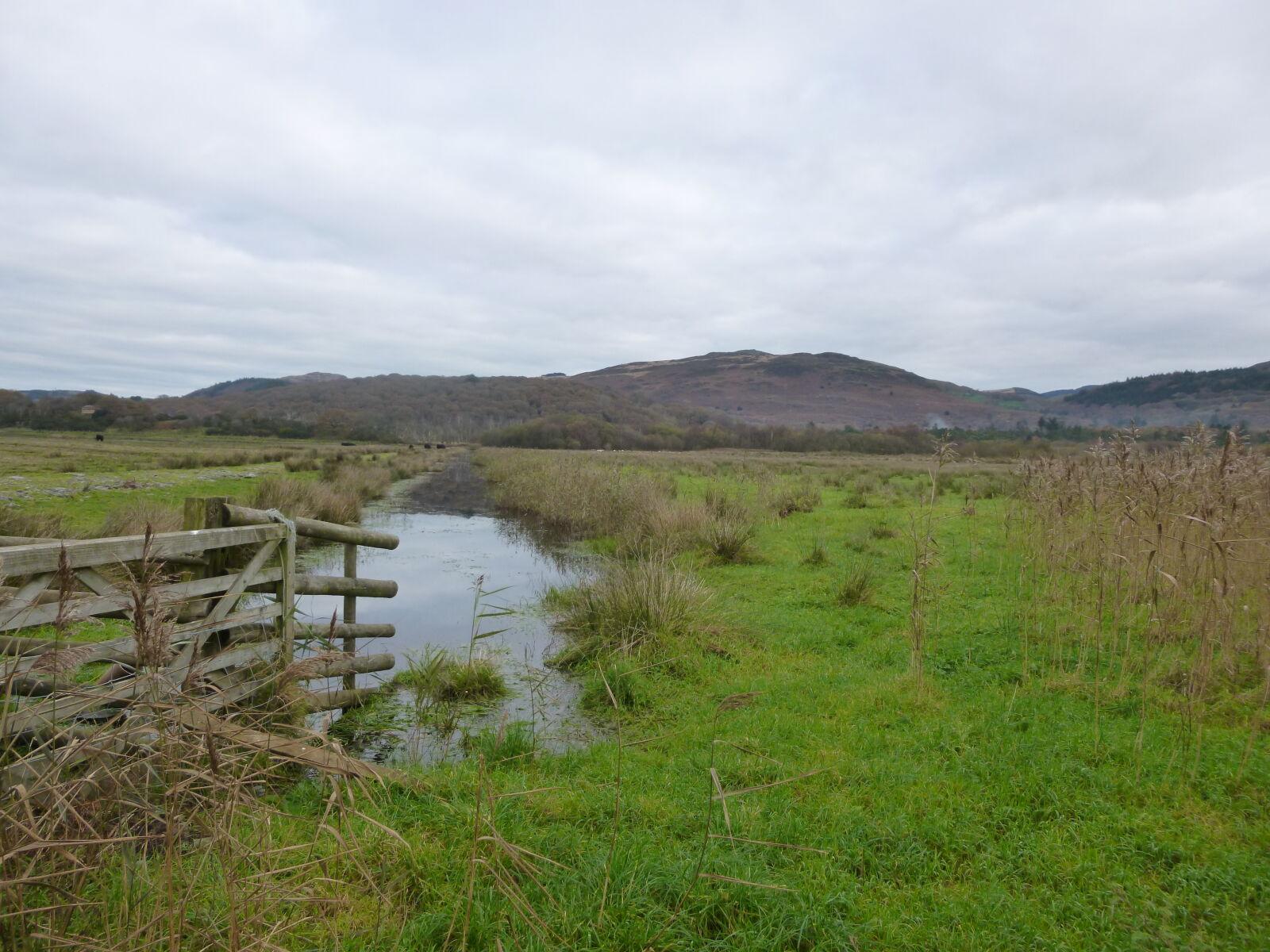 "Panasonic DMC-SZ3 sample photo. ""Fence, green, marsh, nature"" photography"