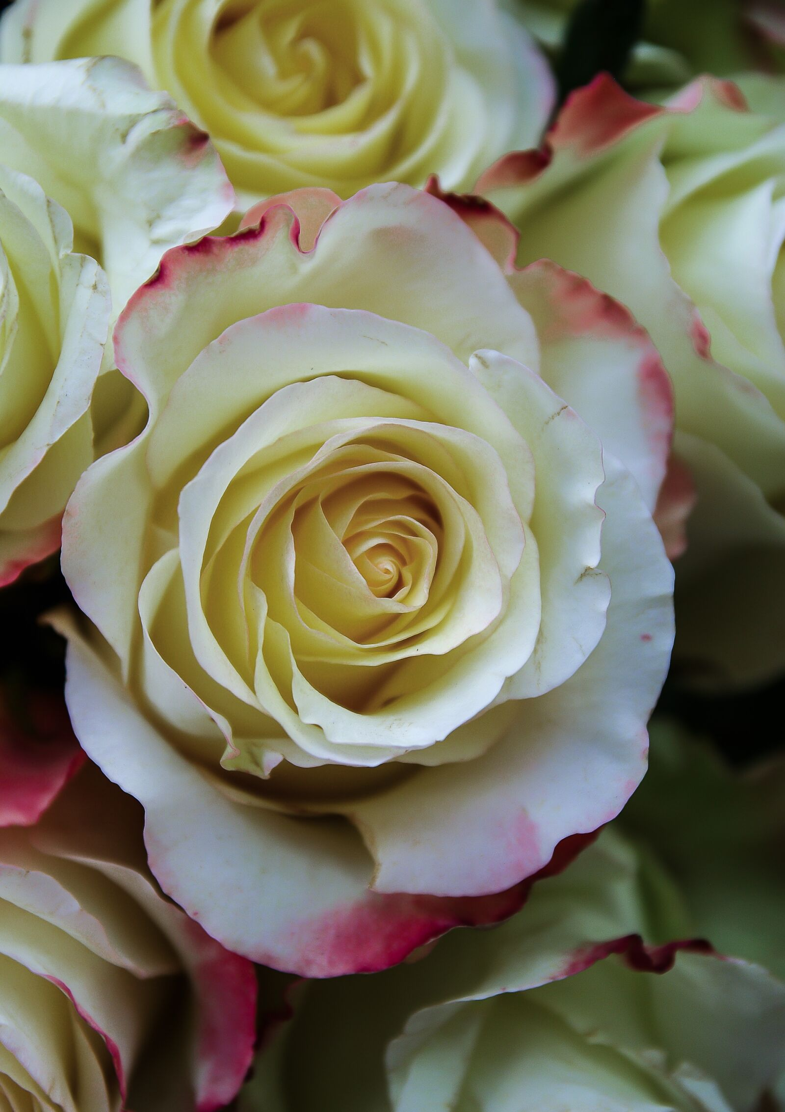 "Pentax K10D sample photo. ""Pink, flower, petals"" photography"
