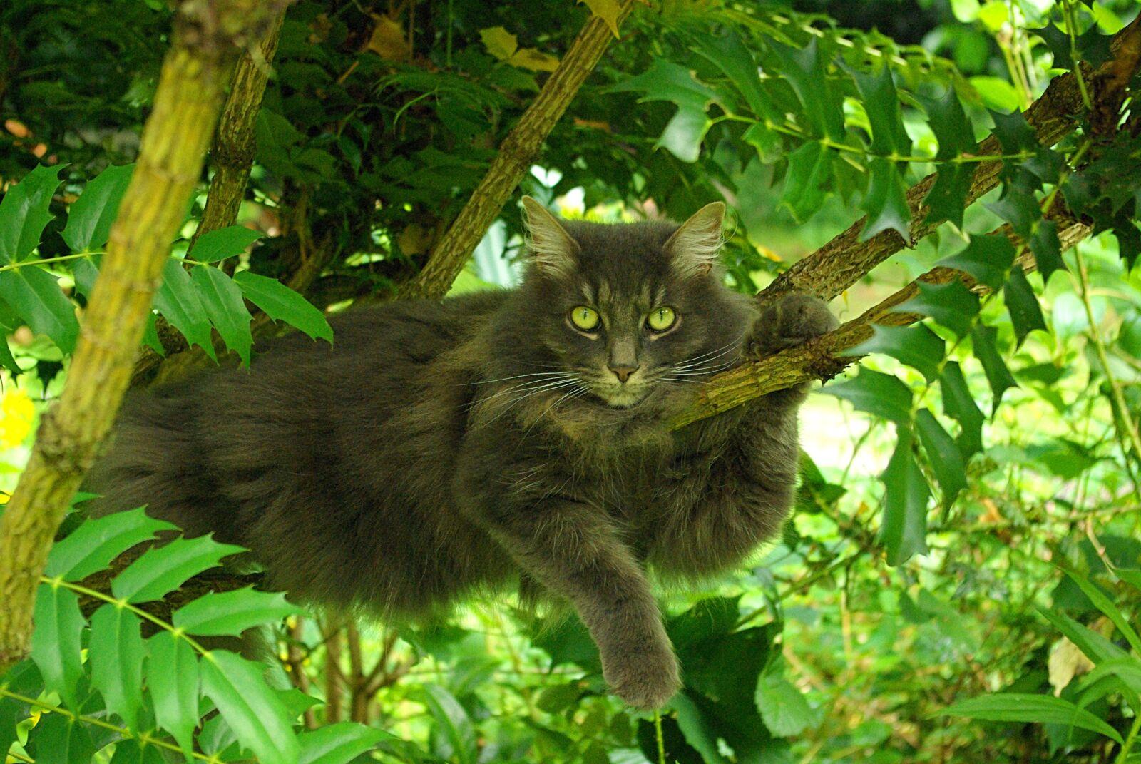 "Pentax K10D sample photo. ""Nature, animal, tree"" photography"