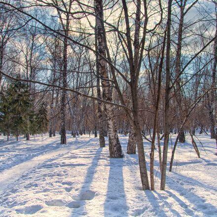 park, winter, sun, Pentax K-500