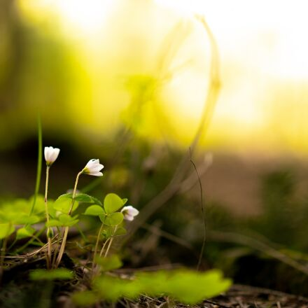 nature, plant, grass, Sony ILCE-7RM2