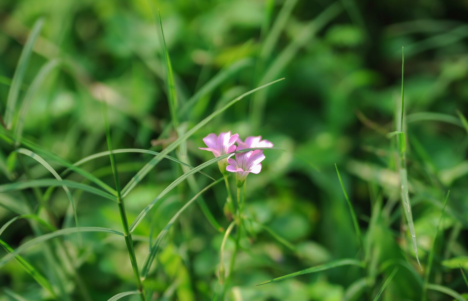 """Nikon D700 sample photo. """"Neck, flower, the leaves"""" photography"""