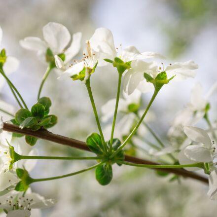 meadowsweet trees, meadowsweet flower, Sony NEX-5N