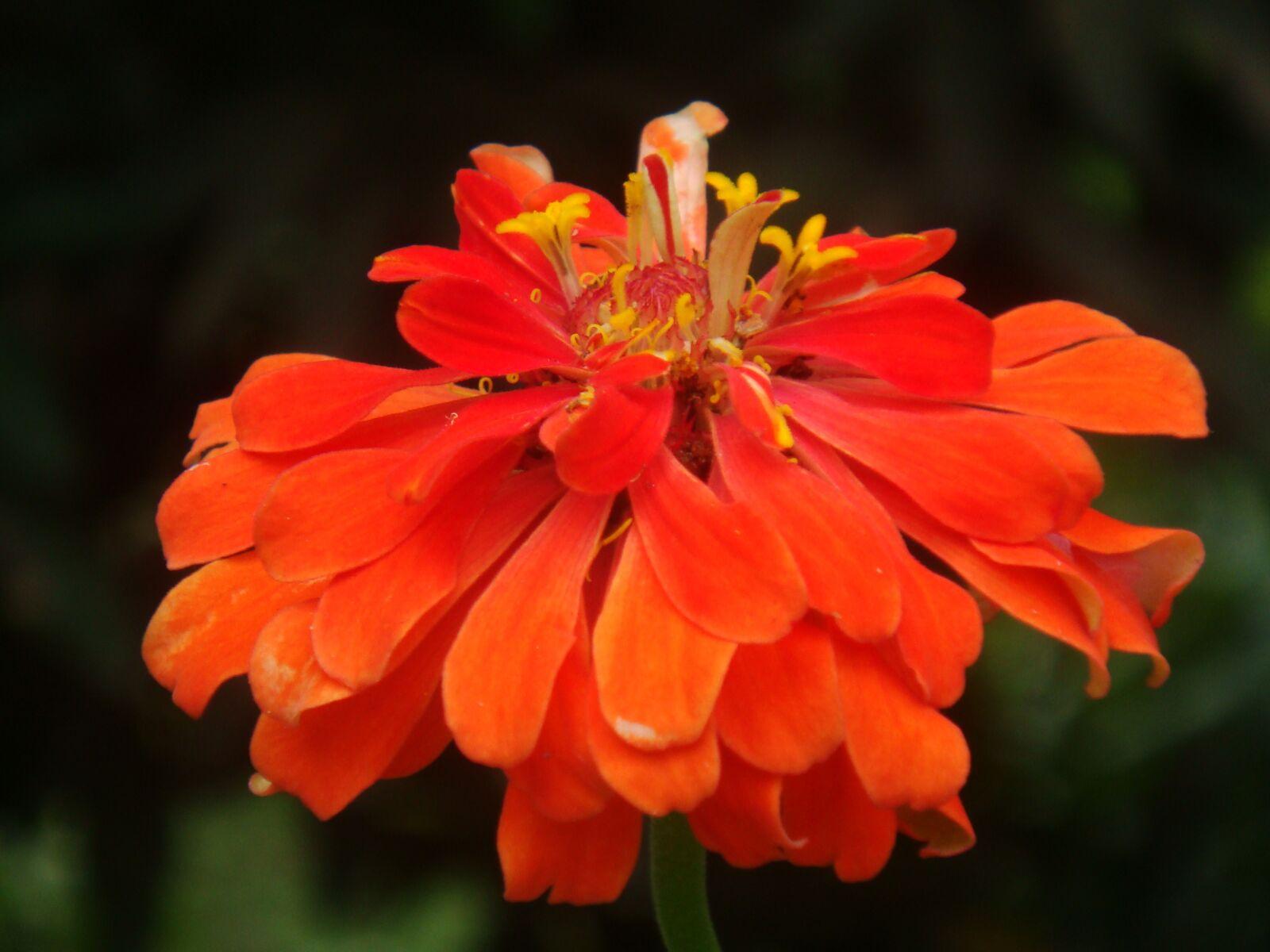 flower, macro, nature