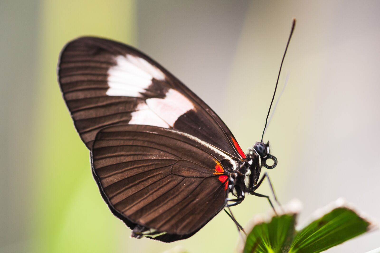 "Nikon D700 sample photo. ""Butterfly, nature, macro"" photography"