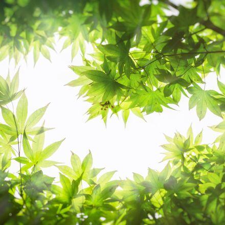 maple, wood, the leaves, Sony NEX-5N