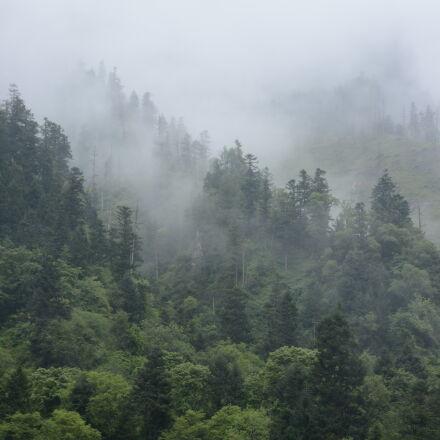 fog, foggy, forest, Nikon D7100