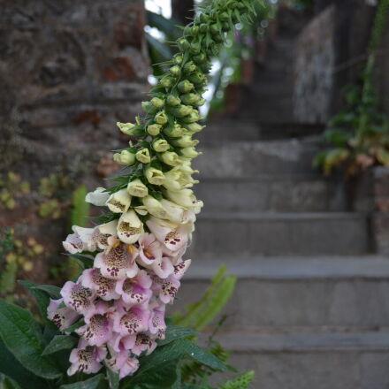 flower, Nikon D5100