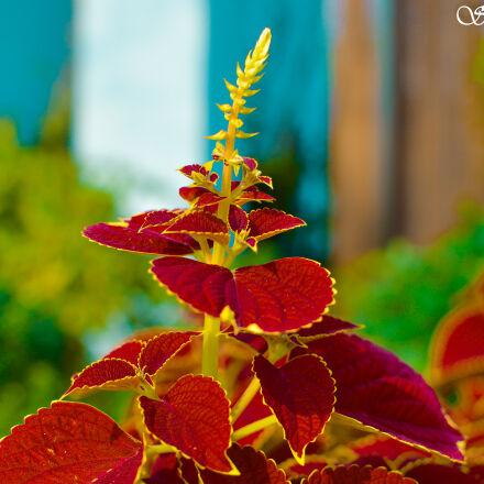 beautiful, flowers, blurred, background, Nikon D3200