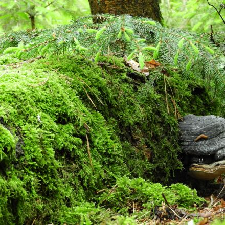 forest, dead wood, nature, Nikon COOLPIX B700