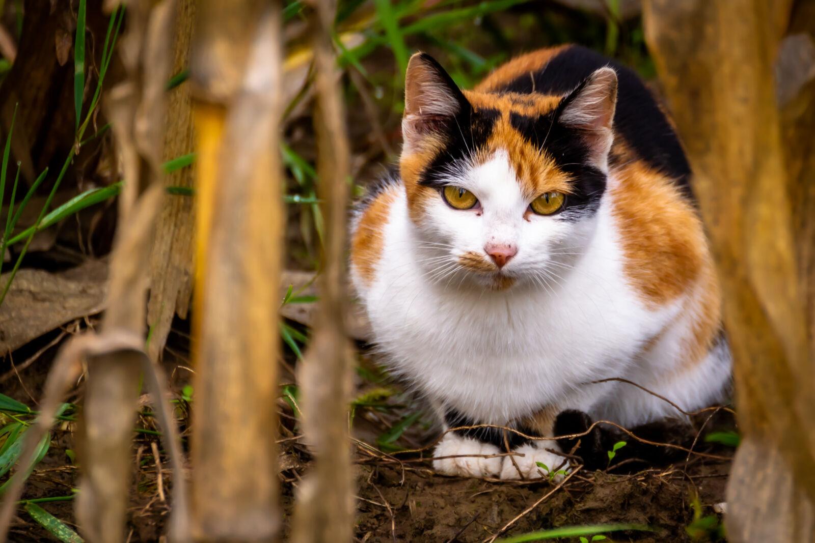 """Nikon D3100 sample photo. """"Cat"""" photography"""