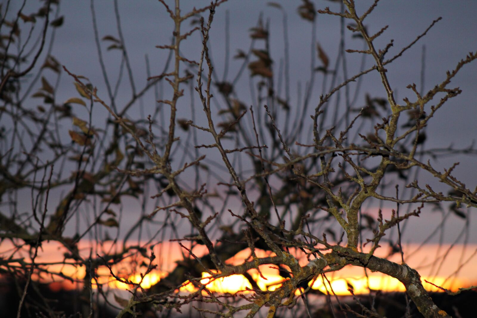 "Canon EOS 1100D (EOS Rebel T3 / EOS Kiss X50) sample photo. ""Aesthetic, twilight, dusk"" photography"