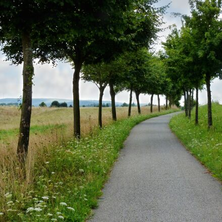 cycle path, trees, landscape, Panasonic DMC-FS35