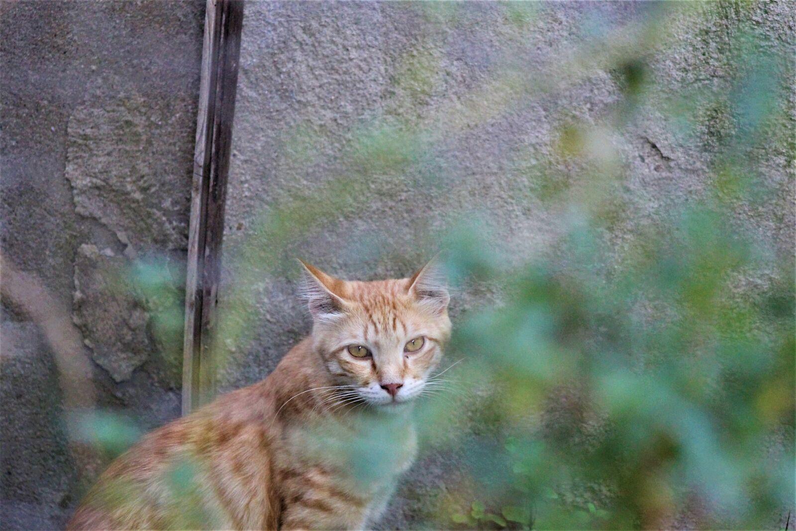 "Canon EOS 1100D (EOS Rebel T3 / EOS Kiss X50) sample photo. ""Kedi, sokak kedisi, sokak"" photography"