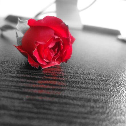 salem, office, rose, Sony DSC-WX150
