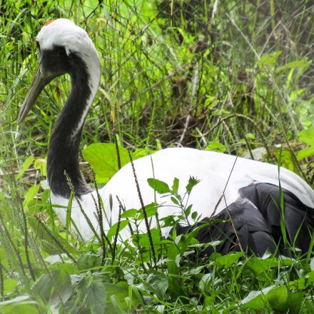 forest, bird, nature, wildlife, Canon POWERSHOT SX520 HS