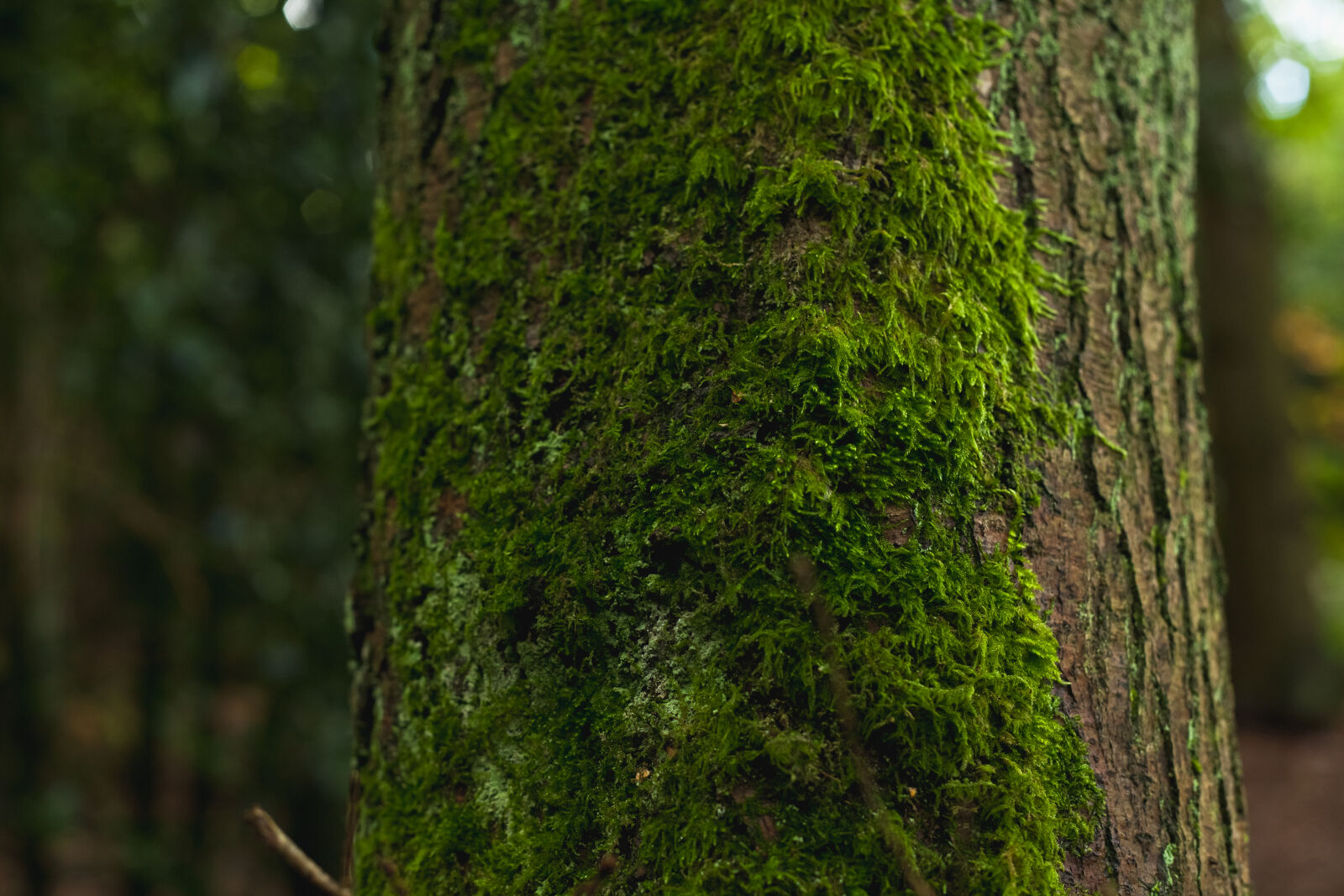 forest, moss, tree, trunk