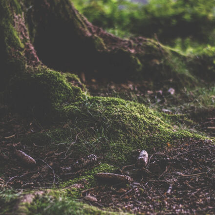 daylight, environment, landscape, moss, Nikon D5300
