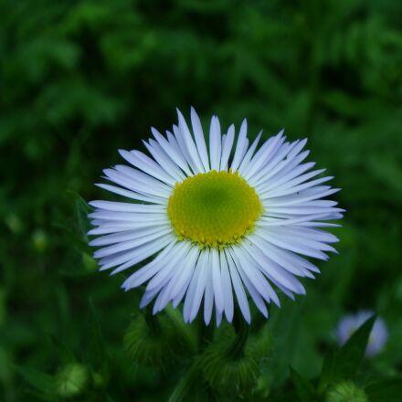 nature, summer, flora, Sony DSC-T70