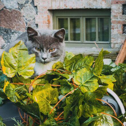 cat, leaves, autumn, Canon IXUS 500 HS